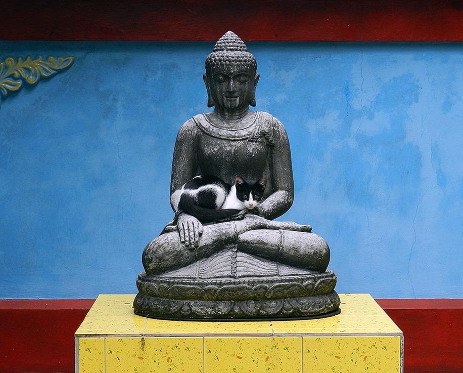 Hof-Buddha-Katz